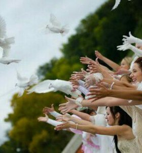 Голуби на свадьбу и праздники