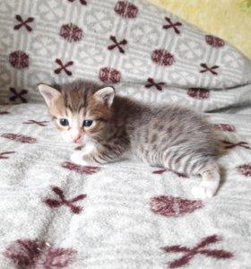 Котенок мальчик 3