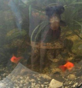 7 рыб