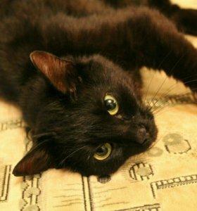 кошка Мисти в добрые руки
