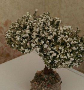 ЖИВОЕ дерево бонсай