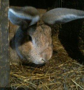 Парное мясо кролика.