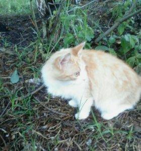 Котята и кошечки коты