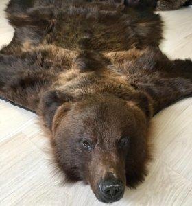 Шкура медведя с головой