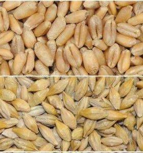 Ячмень с пшеницей дроблёные