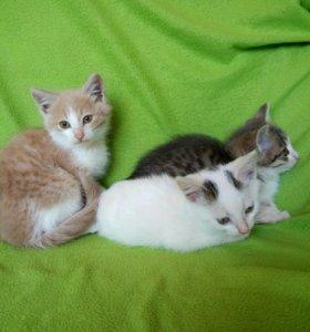 Активные деревенские котята