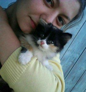 Отдам котят)