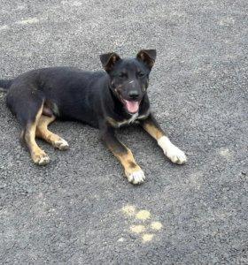 Собака во двор