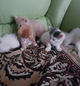 Пять замечательных котят)) все пушистые, ласковые.