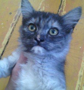 Котята кошки крысолова