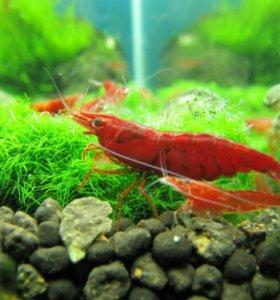 Для аквариума креветки, растения
