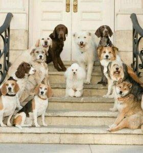 Зоогостиница, передержка собак и кошек