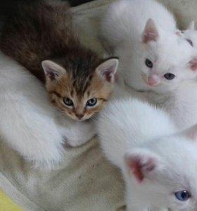 Отдадим котят в добрые руки