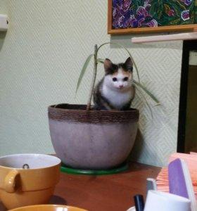 Отдам котенка в добрые руки )