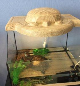 Черепаха красноухая с домом