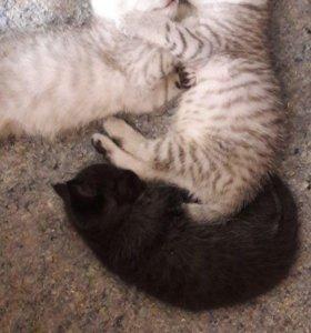 Трое котят)))))