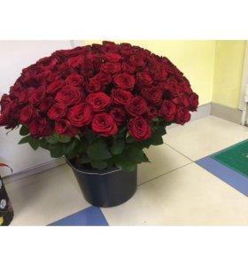 Розы любое количество от 5 штук