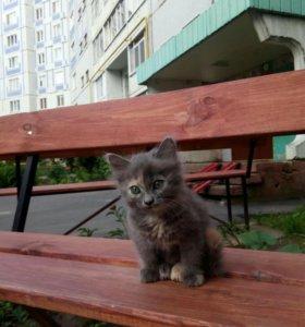 Очень ласковый котенок