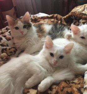 Отдадим бесплатно котят в добрые руки.