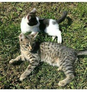 Отдам котят: Две кошки, один котенок