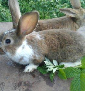 Кролики распродажа