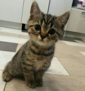Кот в добрые руки)