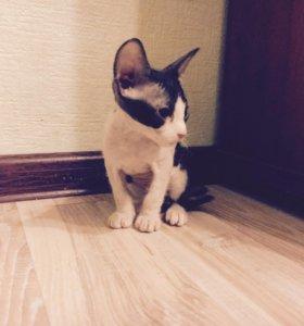 Котенок флок