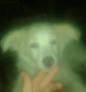 Собака Боня