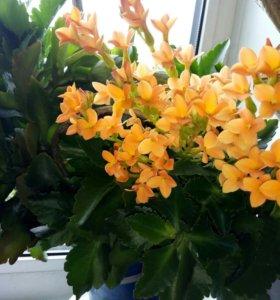 Цветы 💐