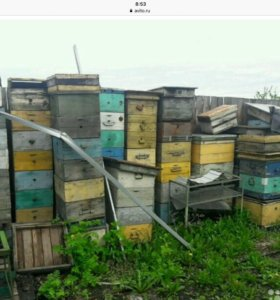 улья корпуса для пчел