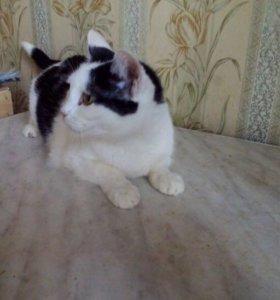 Кошки забери стерилизованы