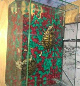 Красноухие черепахи с террариумом.