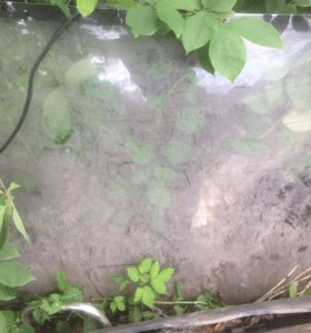 Заднее стекло АУДИ 80