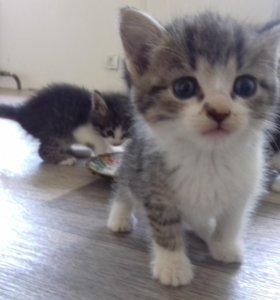 Милые , пушистые котята в добрые руки 😻😻😻