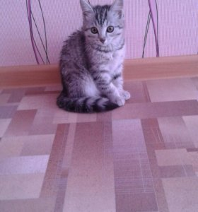 Отдам кошечку в хорошие руки!)))