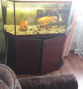 Аквариум на 150 литров с рыбками