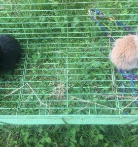 Кролики декор