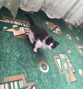Котёнок ( отдам даром)!!