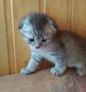 Котёнки