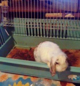 Кролик дикоротивный