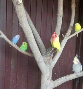 Продам птиц