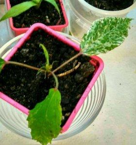 Продаю комнатные растения