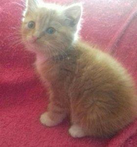 Отдам в добрые руки рыжего котенка!