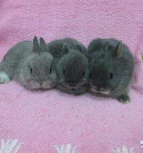 Питомник кроликов