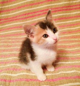 Ласковые котята