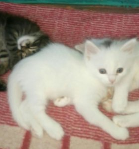 Котята и кошечки