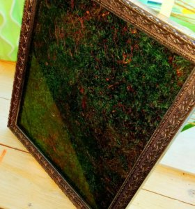 Картина из натурального мха