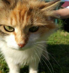ласковые кошки (девочки) в добрые руки!