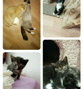 Котята ищут дом)