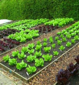 Уборка за вашим садом и огородом